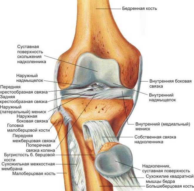 В нормально функционирующем организме повредить колено можно, лишь дав ему огромную нагрузку, то есть, порвав связку, или повредив хрящ.