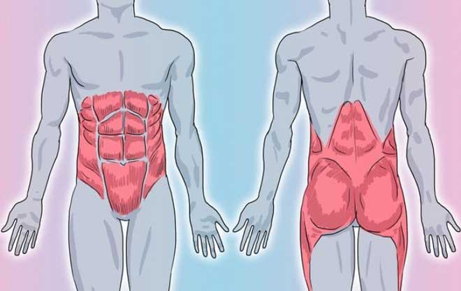 Спина—это хрупкая структура, которую легко повредить, если заранее не позаботиться об ее укреплении.