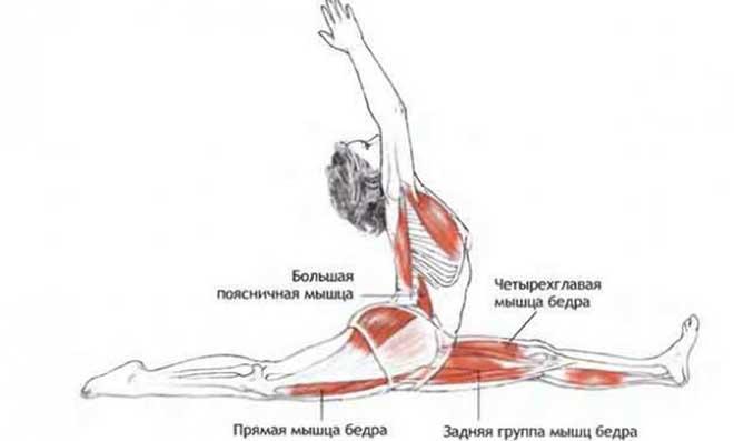 Упражнения для продольного шпагата лучше выполнять в статических позах. Старайтесь по минимуму использовать пульсирующие упражнения вверх-вниз, это может привести к растяжениям.
